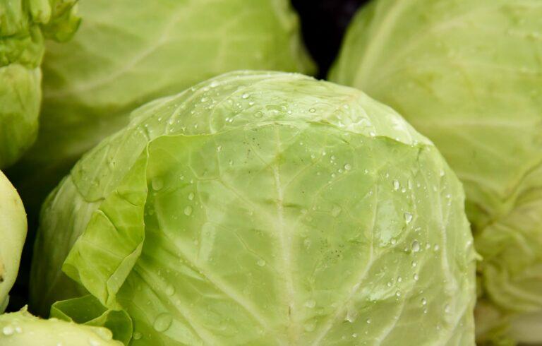 ιδιότητες του λάχανου